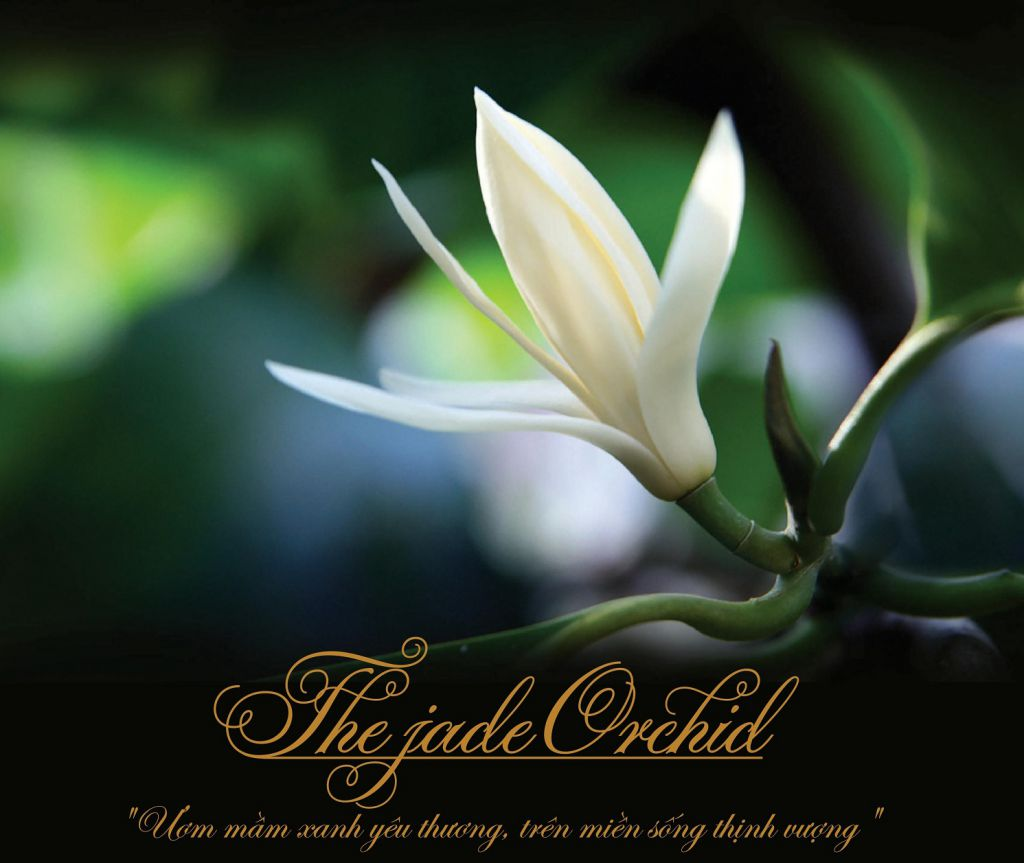 câu chuyện dự án the jade orchid